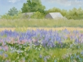 Lavender Flower Field 24 x 24 oil on canvas