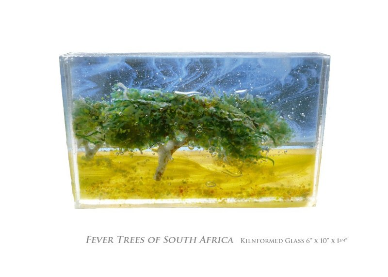 Fever Trees in South Africa